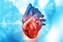 HerzMenschliches Herz