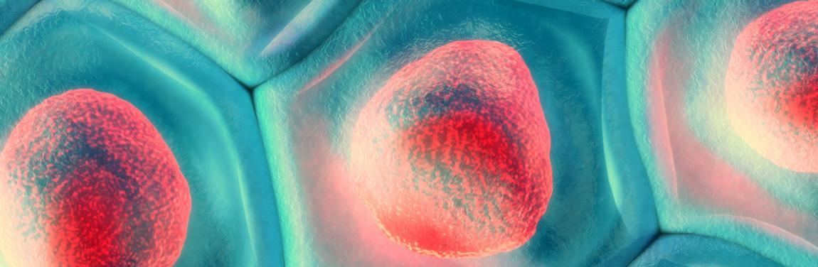 Hautzellen