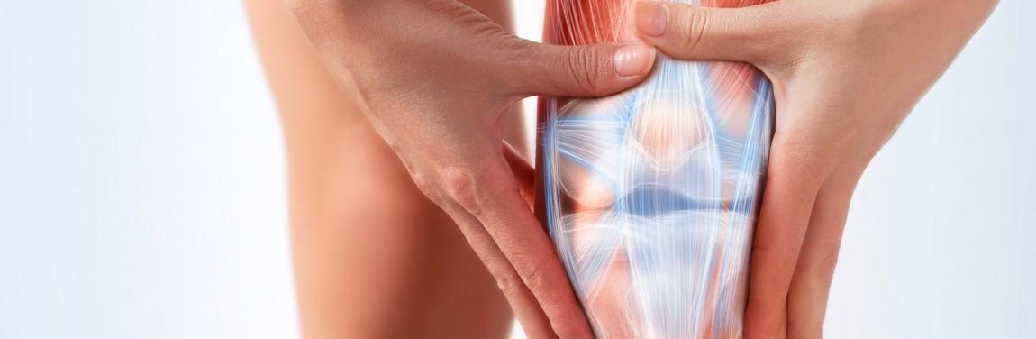 Muskeln und Gelenke