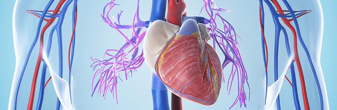 Wissensforum Herz